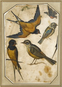 Five Studies of Birds