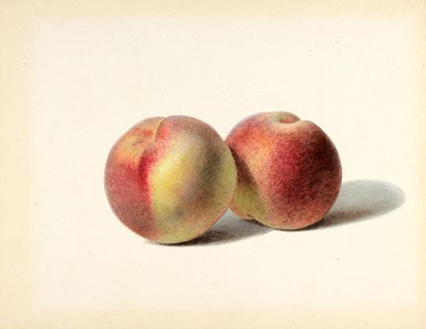 Two Peaches