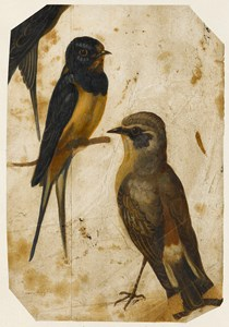 Two Studies of Birds and a Partial Study of a Third