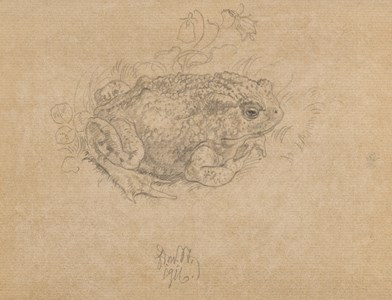 Study of a Toad