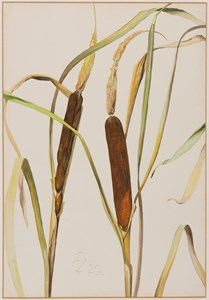Study of Bullrushes