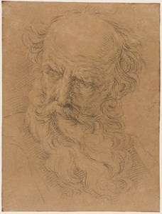 The Head of a Bearded Old Man