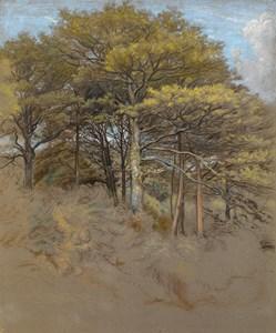 Study of Oak Trees