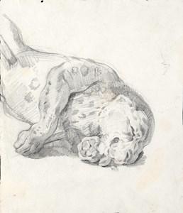 A Lioness Asleep