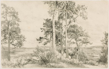 Landscape with a Grove of Trees, Brandenburg