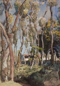 A Grove of White Poplar Trees