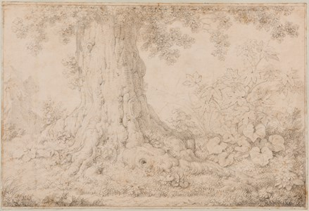 Study of the Base of a Tree and Undergrowth