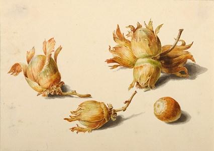 Seven Hazelnuts