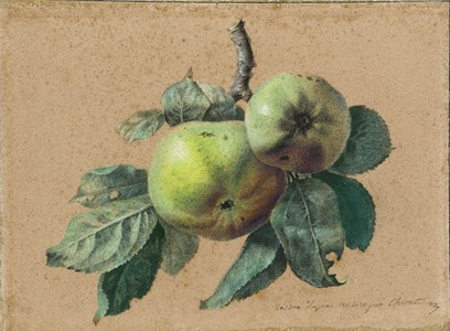 Study of Apples on a Branch