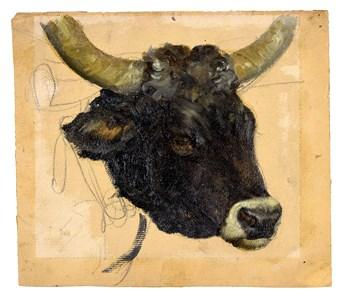 The Head of a Bull