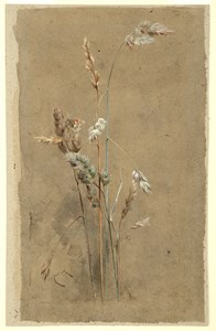 Grasses and a Small Heath Butterfly