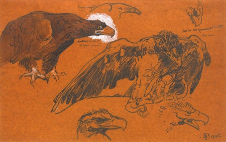 Studies of an Eagle