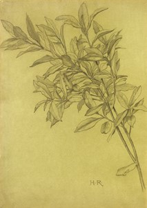 Study of Bay Leaves