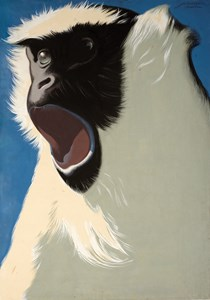 A Mantled Guereza: Design for a Poster for the Dresden Zoo