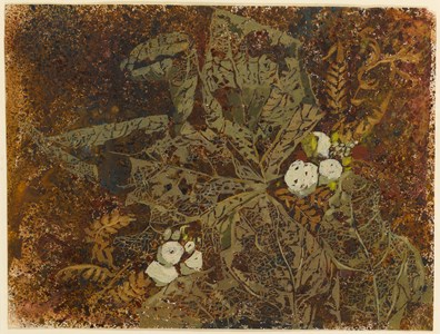 A Study of Foliage with White Berries