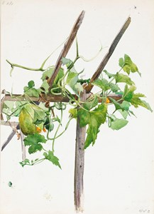 A Trellis with Leaves and Fruit