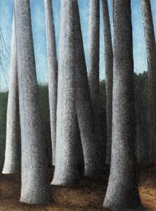 Trunks of Beech Trees