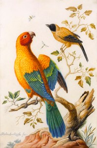A Sun Conure Parrot and a Yellow-Backed Oriole