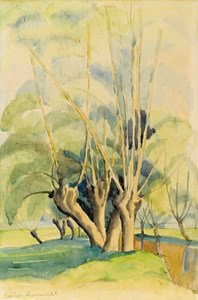 Study of Willow Trees