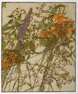 Recto: Wildflowers and a Grasshopper Verso: Studies of Plants