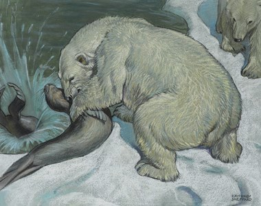 Polar Bears Hunting Seals