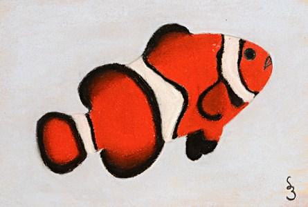 A Clownfish