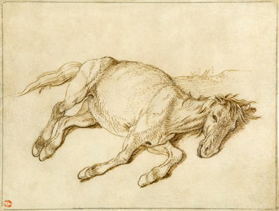 A Horse Lying Down