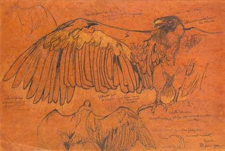 Studies of the Wings of an Eagle